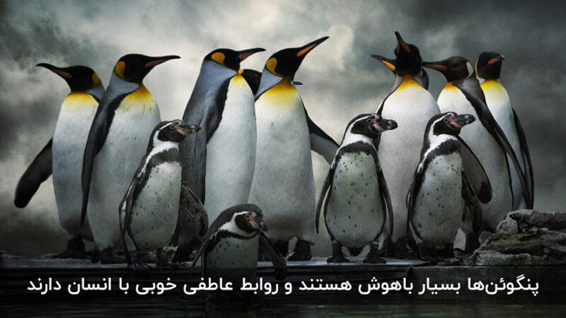 الگوریتم پنگوئن برای مبارزه با لینک سازی غیرطبیعی طراحی شده است